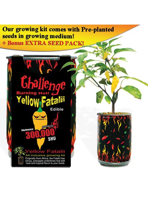 Challenge Yellow Fatalii Pepper Plant - 300,000 SHU