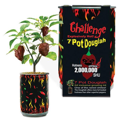 Challenge 7 Pot Douglah Trinidad Scorpion Pepper Plant - 2,000,000 SHU