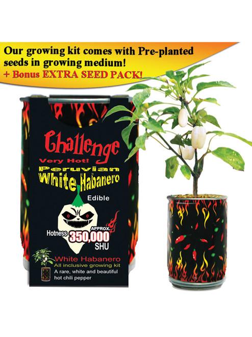 Challenge Peruvian White Habanero Pepper Plant - 350,000 SHU