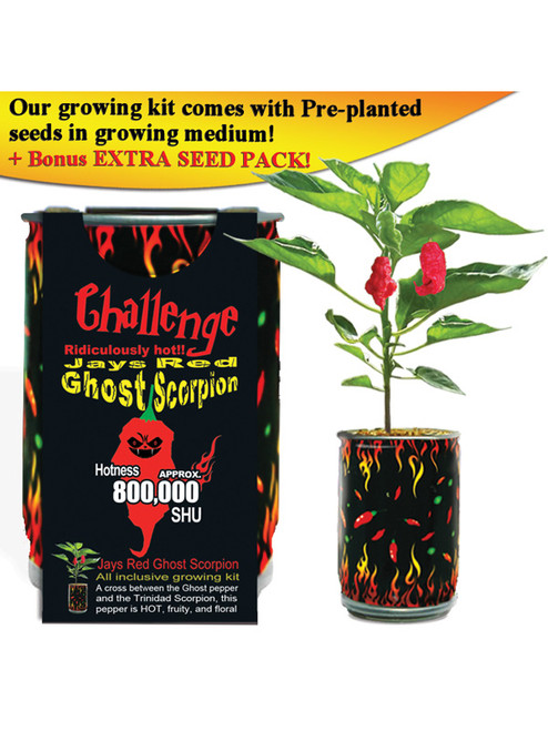 Challenge Jay's Red Ghost Scorpion Pepper Plant - 800,000 SHU