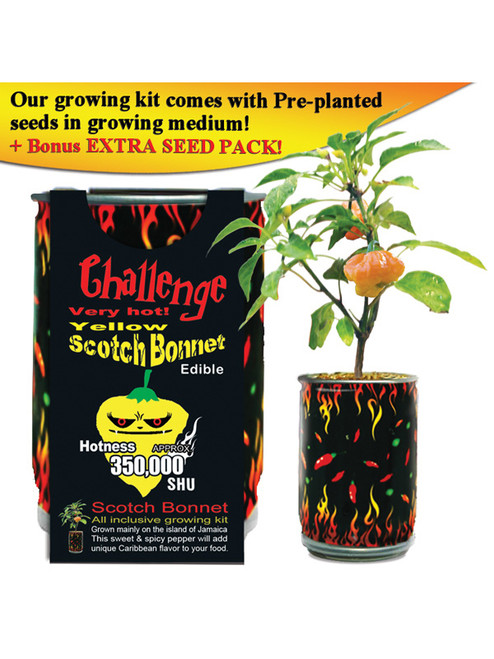 Challenge Yellow Scotch Bonnet Pepper Plant - 350,000 SHU