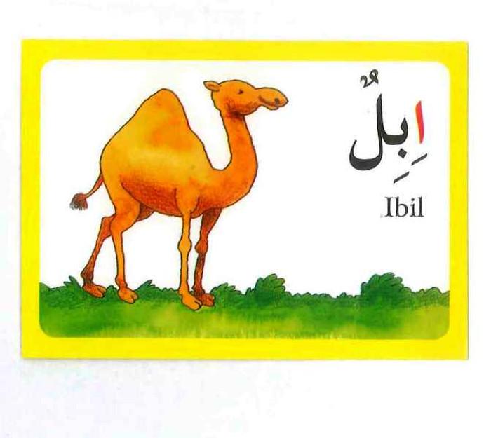 Arabic Alphabet Flash Cards Flashcards