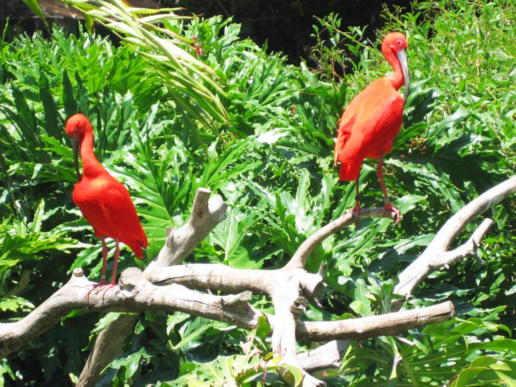 Orangy County Zoo