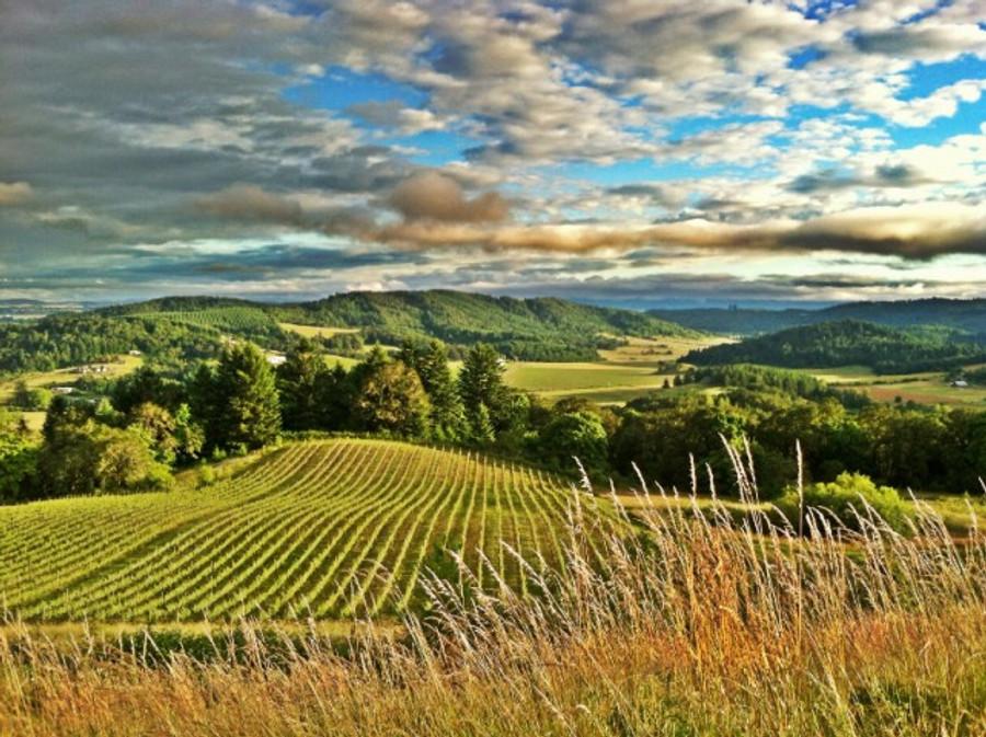 Pinot Royale: California v Oregon