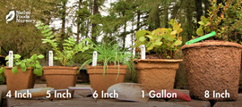 Pot Sizing Guide