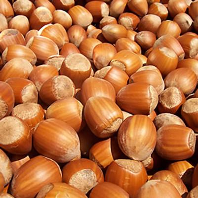 California Hazelnut