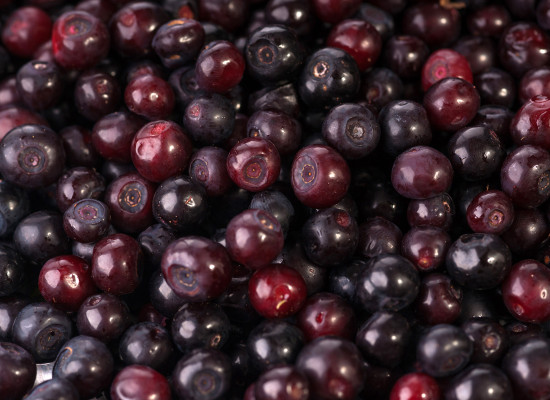 Black Huckleberry Main Product Image