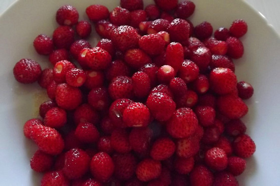 Woodland Strawberries