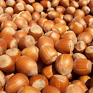 California Hazelnut thumbnail image