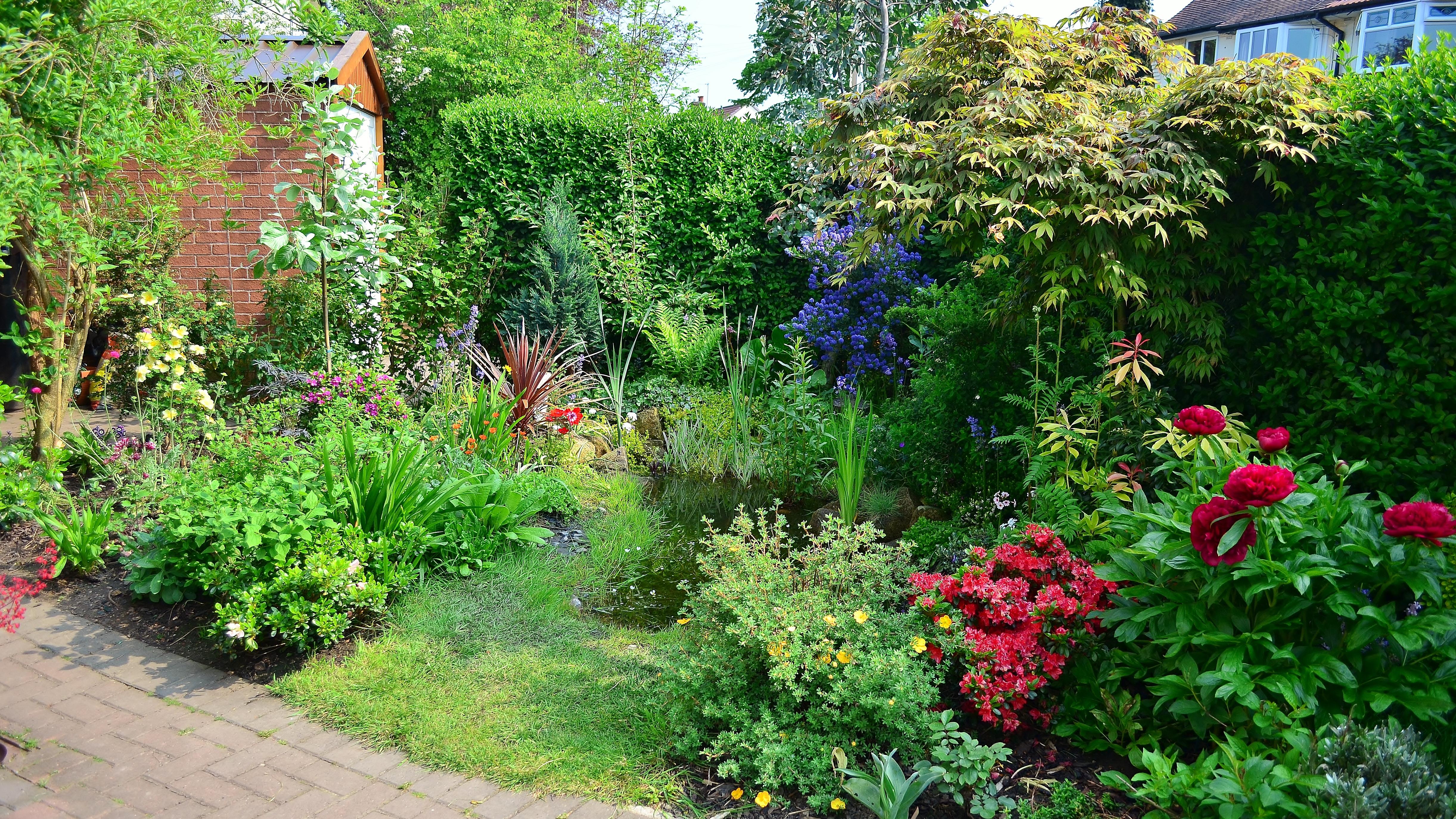 front yard garden habitat