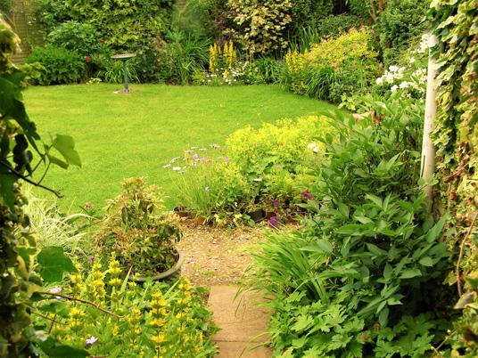backyard garden with native plants