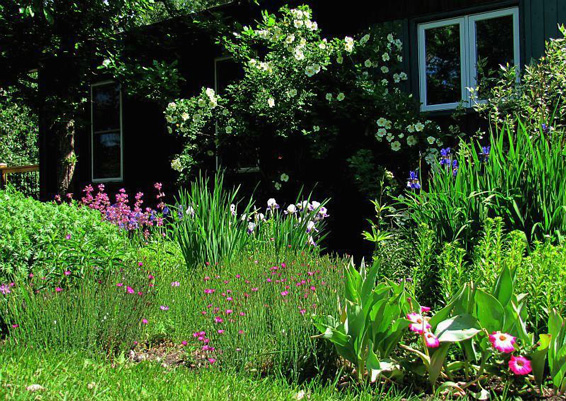 native plants in backyard garden