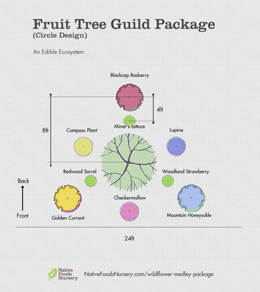 fruit tree guild package