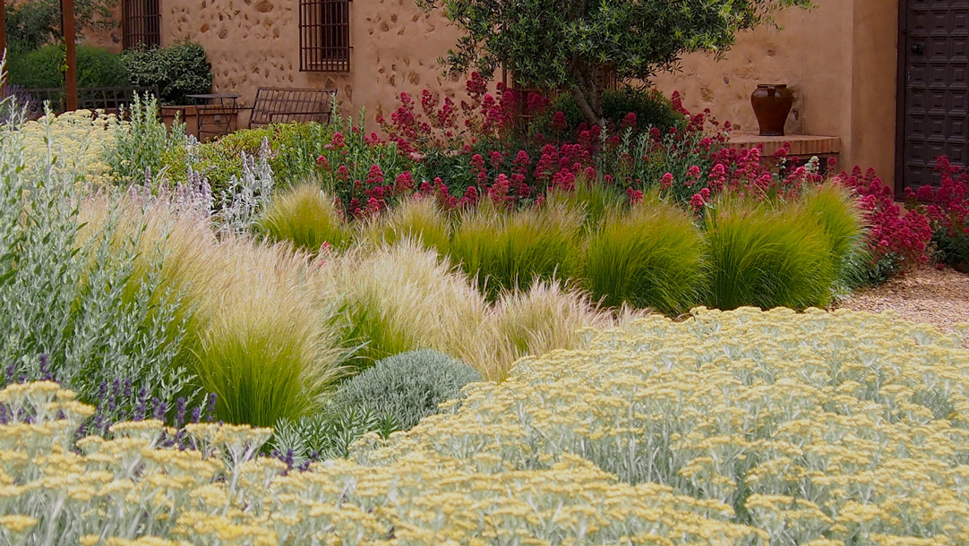 ornamental grasses in backyard landscape