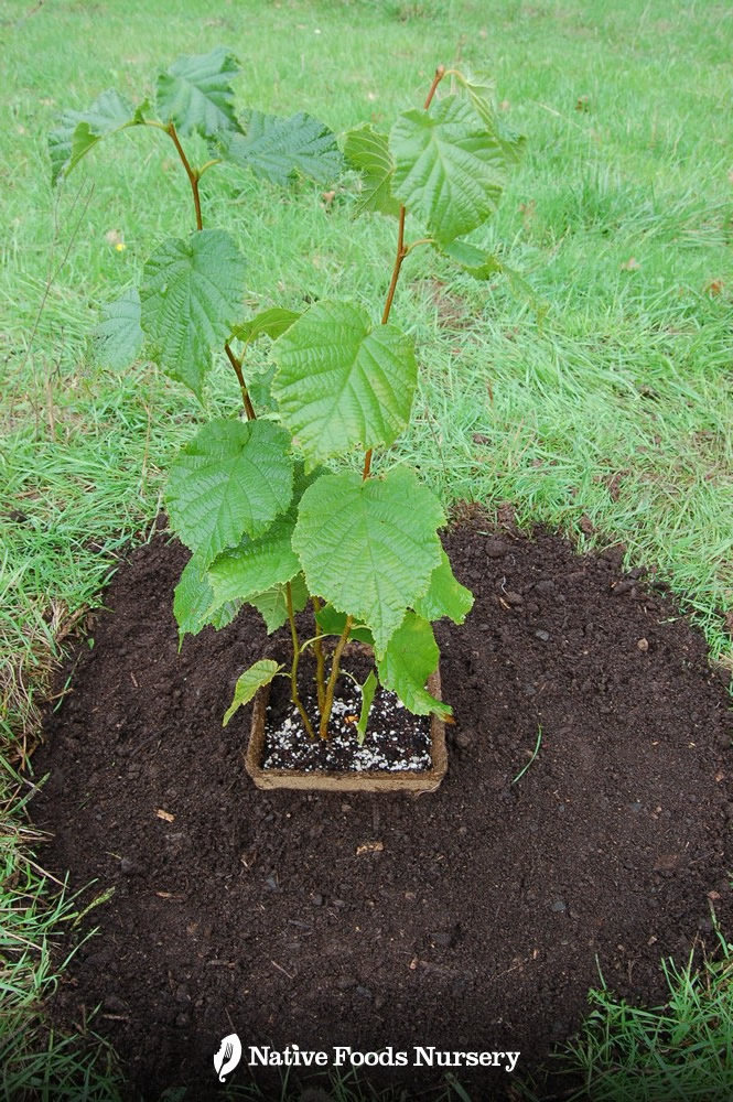 plant-care-2.jpg