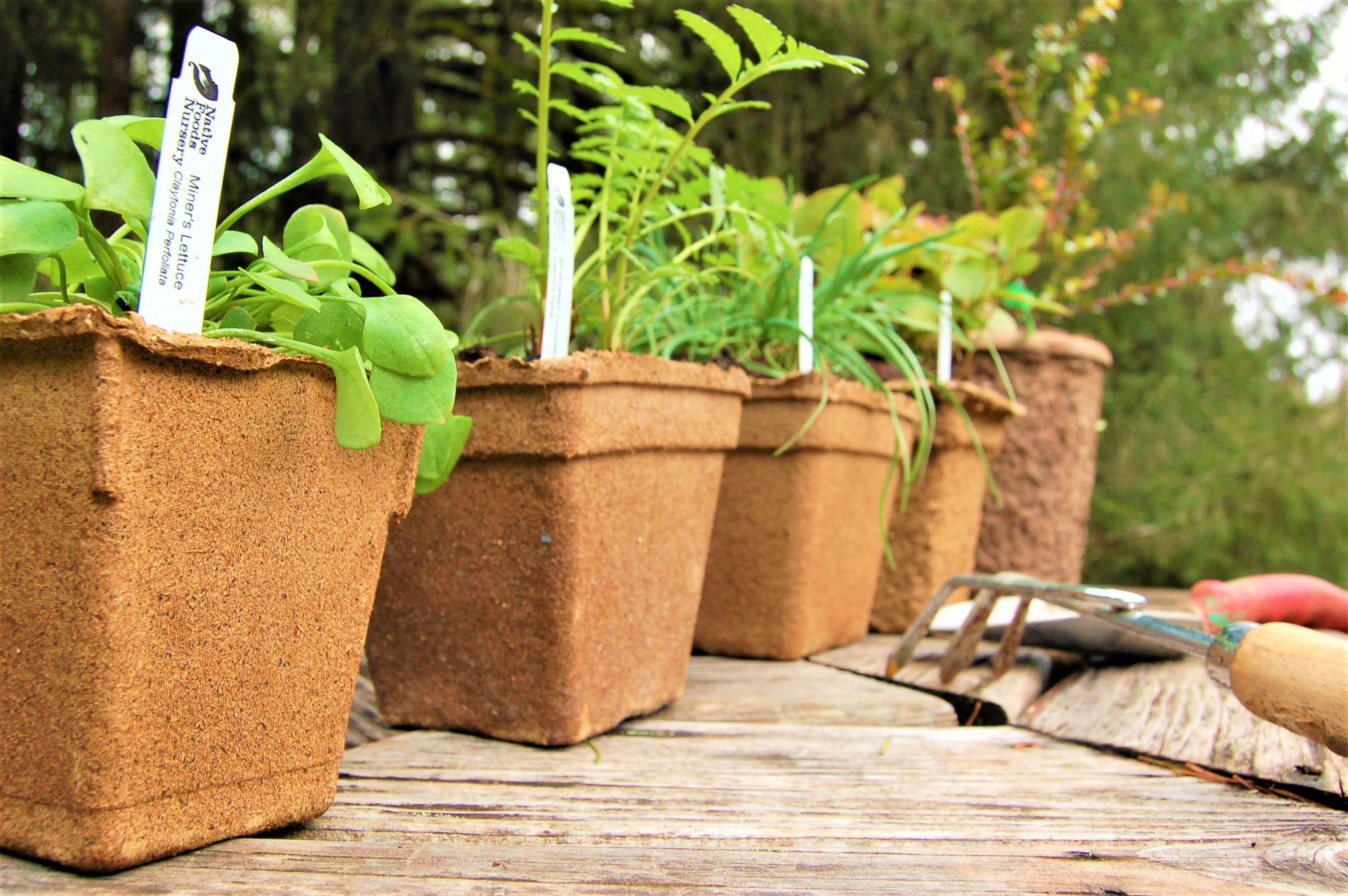 pot-sizes-picture-side-view-small-to-large.jpg