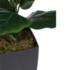 3'H Potted Fiddle-Leaf Fig Plant