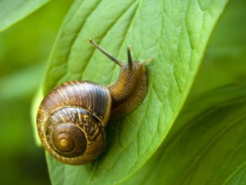 How Do I Get Rid of Snails & Slugs in the Garden?