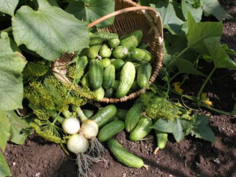 Crop Rotation: How to get started in the garden