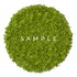 Uji Matcha Powder Sample