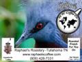 FTO Papua New Guinea