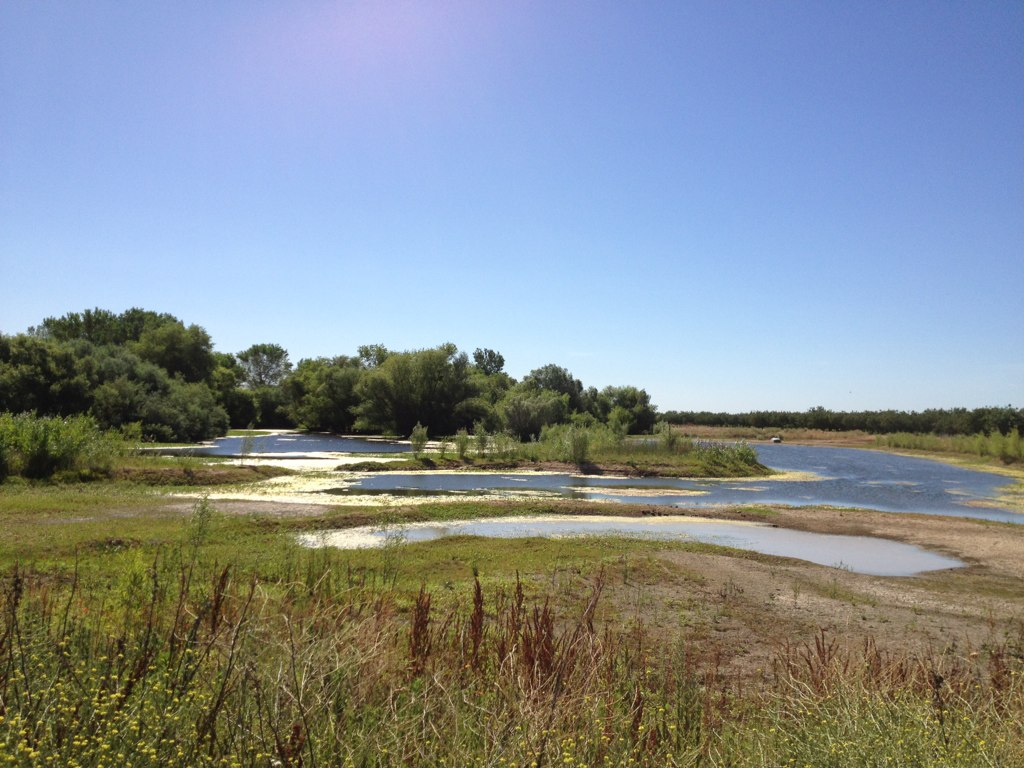 Farm lake and bird sanctuary