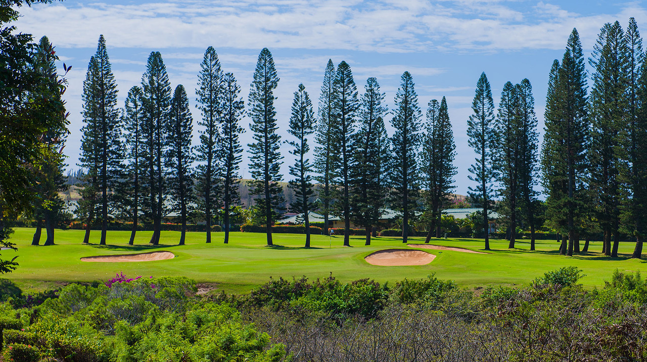 Kapalua Bay Course | Golf at Kapalua is known for its beautiful fairway lines Norfolk Pines.  Book NOW and SAVE $10pp at Kapalua Bay Course | Maui Golf Shop