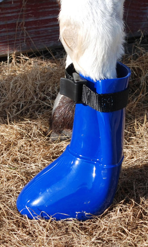 Constructed of strong rubber for when continuous soaking exist Each boot includes a therapeutic pad to draw medications to the area Soft pliable upper  closes tightly just below fetlock Measure toe to heal for sizing