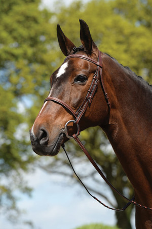 "Features a comfort crown with padding Matching fancy stitched 54"" reins An economical choice"