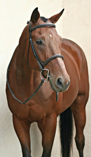 Made of premium leather Padded inlaid crown Raised fancy stitched browband and cavesson Matching laced reins