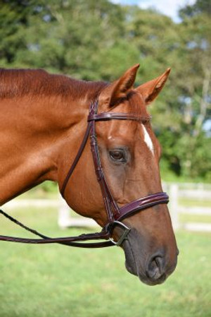 Made of premium Italian leather Padded fancy stitched noseband and browband with distinctive shortened round raising. Comes complete with matching laced reins