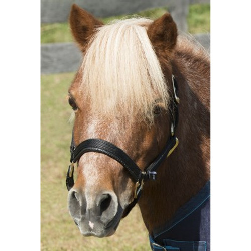 Constructed of quality nylon Padded noseband  Padded and removeable crown piece Adjustable noseband Snap throatlatch