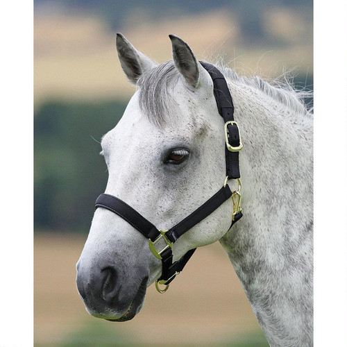 Features removable padding on crown piece Breakaway feature to ensure the safety of your horse Adjustable nose and crown piece