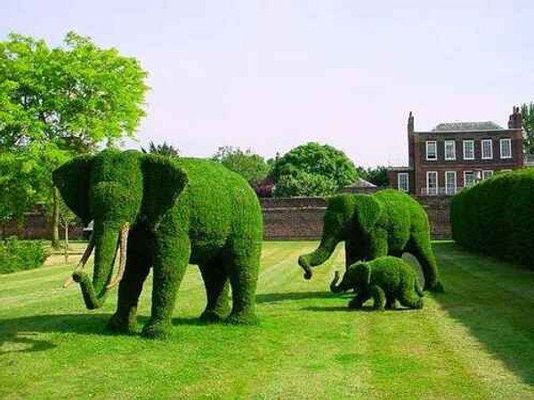 Topiary Moss only requires a minimum amount of sunlight every day to thrive
