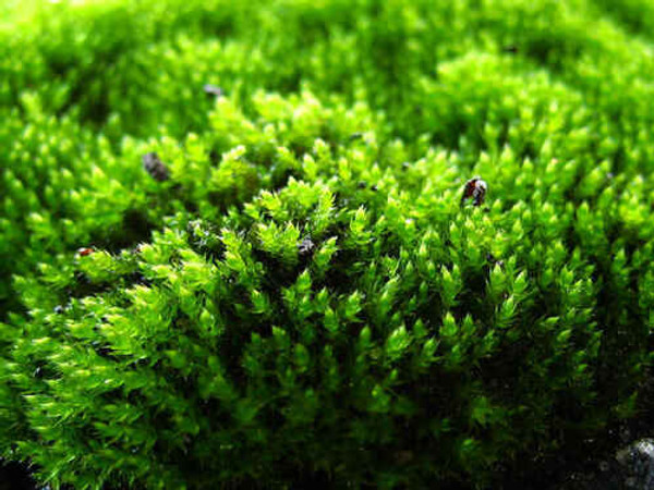 """Peat Moss is utilized as what experts call a """"soil conditioner"""""""