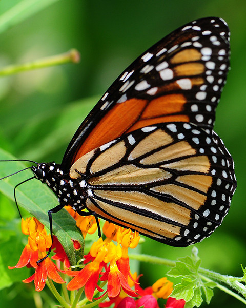 Butterfly Plants - Beginner Package - 9 Plants - Chosen Perfect For Your Zone