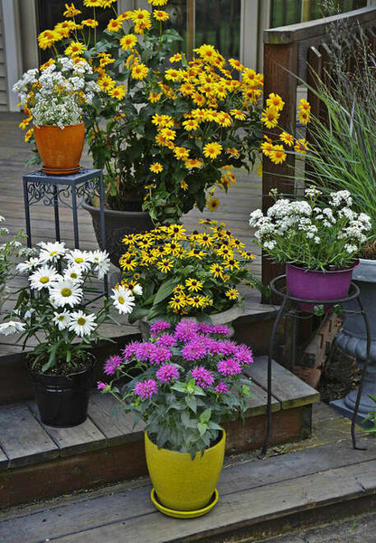 Perennial Plants - Beginner Package - 10 Plants - Chosen Perfect For Your Zone