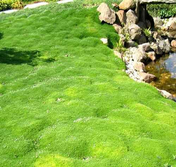 Moss Grab Bag  It  reduces the effects of heavy rains.