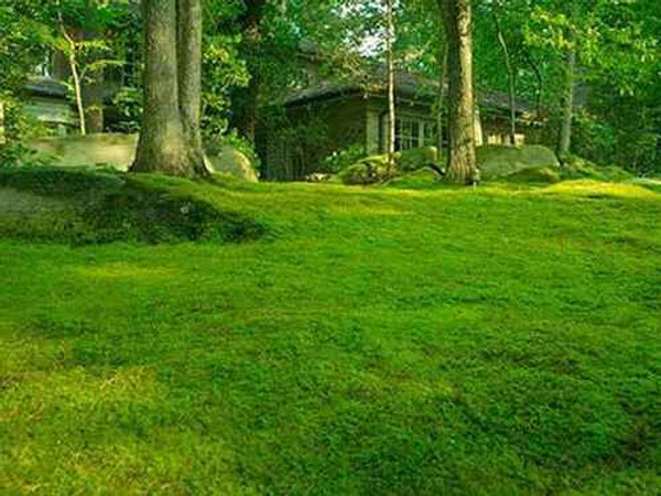 Moss Grab Bag absorb their weight ten times in water, making it a perfect moist area garden plant.