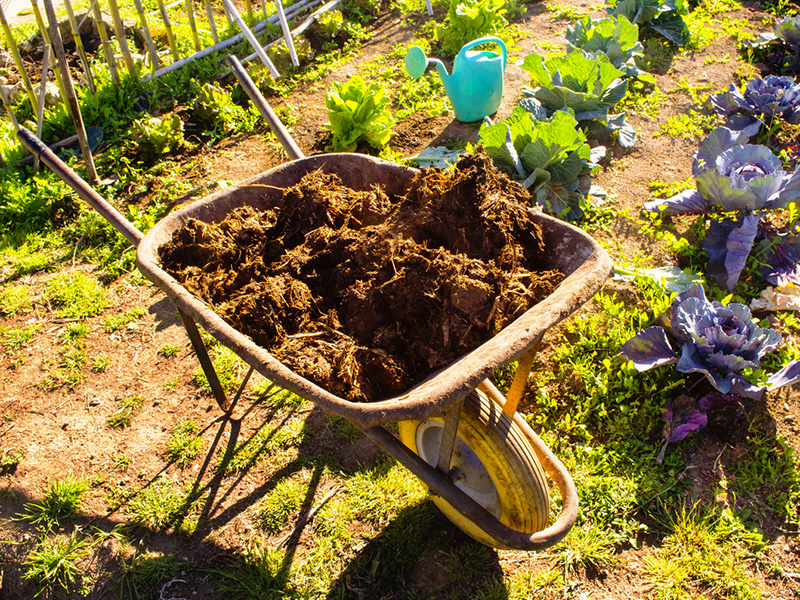 How To Make Organic Fertilizer For Your Garden