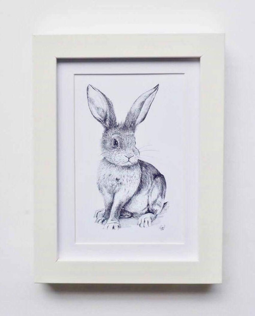 Cottontail