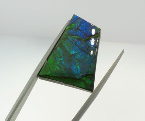 Genuine Natural Ammolite #5005