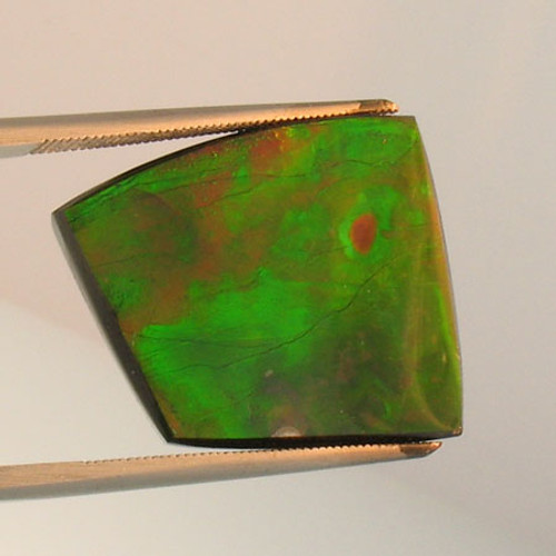 Genuine Natural Ammolite #5022