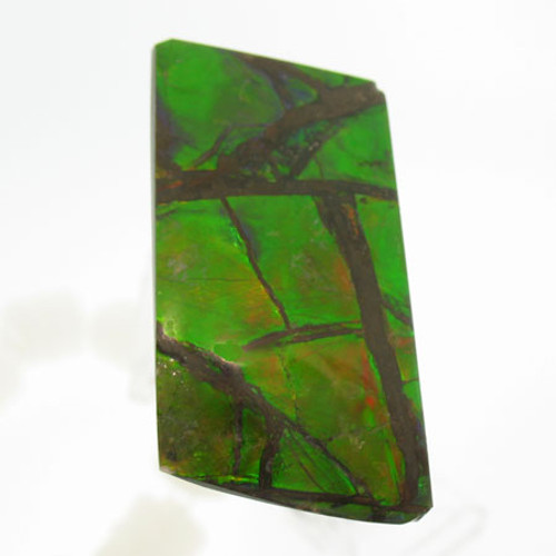 Freeform Ammolite #IT-1043