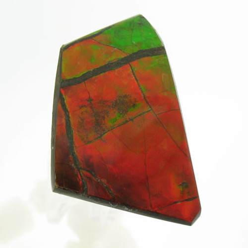 Freeform Ammolite #IT-1049