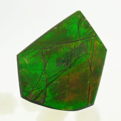 Freeform Ammolite #IT-1051