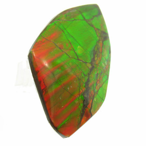 Freeform Ammolite #IT-1052