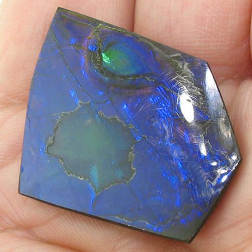 naturally polished Ammolite #IT-831