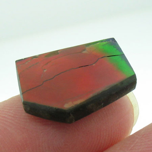 naturally polished Ammolite #IT-832