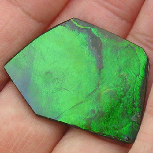 naturally polished Ammolite #IT-834